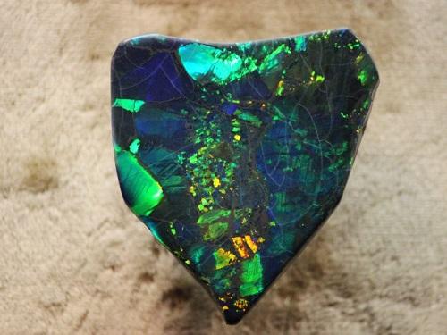 opale arlequin sur matrice noire