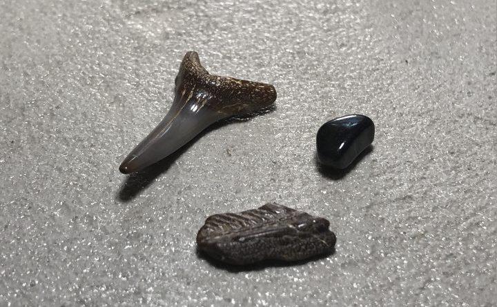 ensemble de dents fossilisés